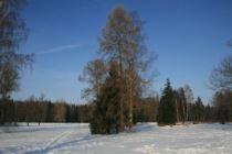 Pavlovsk park in winter